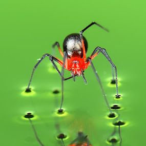 by CK Jack (Teluk Intan, Perak, MY)  http://www.pixoto.com/images-photography/wildlife/insects-and-spiders/27034173