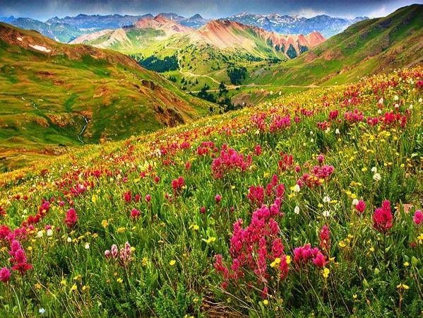 Romanian blooming!♥♥♥