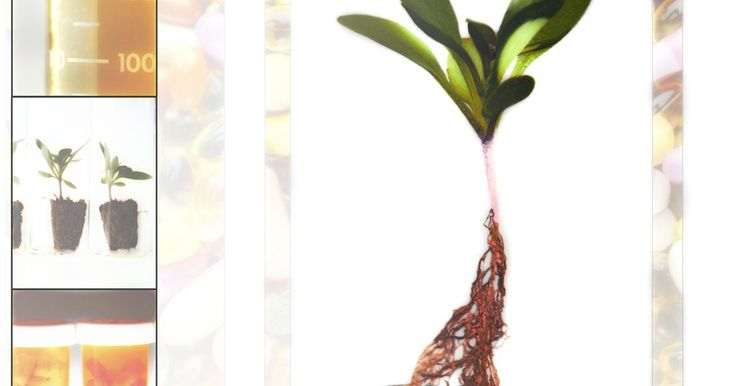Ervas usadas para a tireoide. Há séculos, as ervas têm um papel na manutenção da saúde da tireoide e na correção de doenças da glândula. Podem ser usadas como métodos preventivos de apoio à tireoide. As ervas usadas para esse fim contêm muitos minerais, vitaminas e até elementos que dão suporte à produção hormonal.