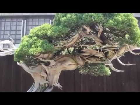 GARDEN   BONSAI   SHOW   AND  CASCADA   FALLS   WORLD  HERITAGE   JAPAN ...