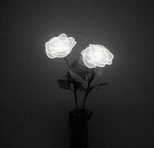 aesthetic, alien, alternative, black, flowers, freedom, goth, grunge, hipster, hologram, indie, neon, pale, pastel, punk, sad, soft, softgrunge, tumblr, vintage, First Set on Favim.com