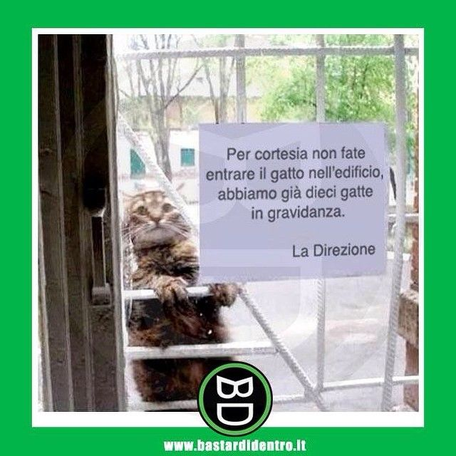 Attenti al #gatto #bastardidentro #cartello #condominio www.bastardidentro.it
