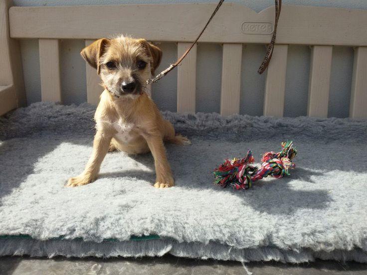 Hund - Welpe, k.A. (Mischling, Hündin, 4 Monate)  - Kleine Fee sucht Dich