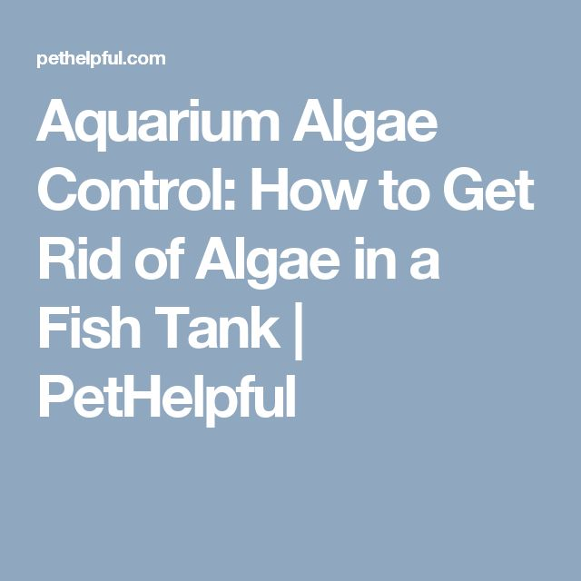 how to stop algae in fish tank