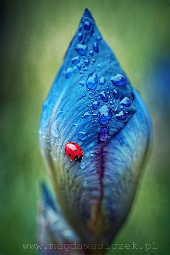 one day the leaves will unfurl and healing will come to nourish us like the water and the soil which got us this far.  and so many want to know what's inside like the ladybug, no ill intent, just curious like the others, like me as well, and yet we  still stay tightly furled, frozen in terror, afraid to move
