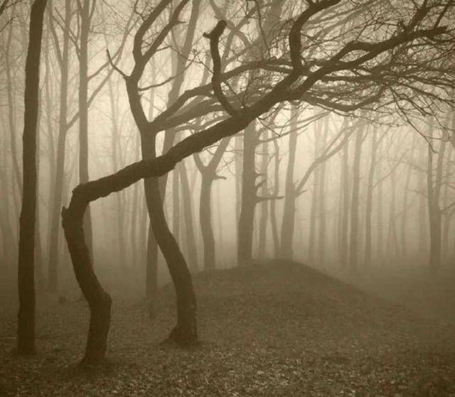بالصور غابات مرعبة في رومانيا تجذب عشرات آلاف السياح سنويا تقع في رومانيا غابات واحدة من أكثر منا Haunted Forest Hoia Baciu Forest Foggy Forest
