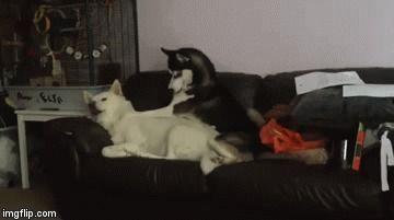 Когда меня пытаются поднять с дивана.