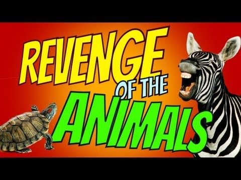 https://www.youtube.com/watch?v=bbZCi5SPbIs In this funny video compilation, we've got animals and they're taking their revenge. Watch as dogs and squirrels and even zebras – fight back. It's an AFV short …
