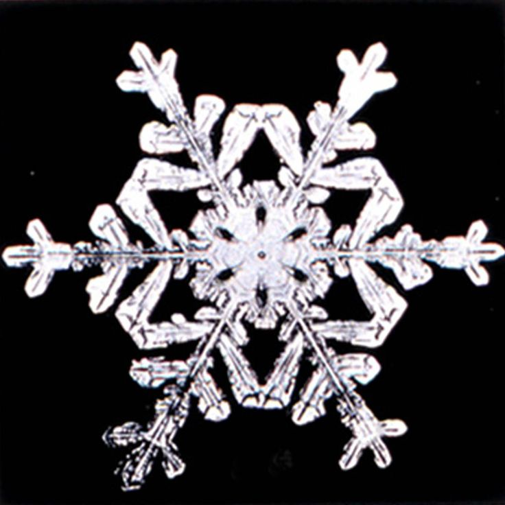 1000 ideas about real snowflakes on pinterest close up for How to make a real paper snowflake