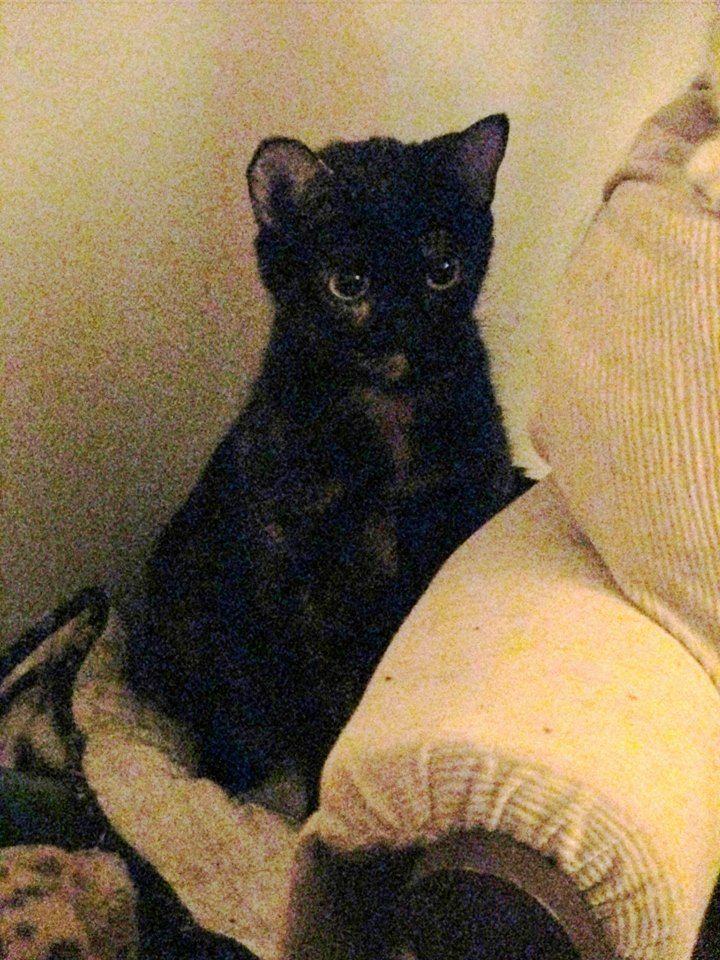 How To Get Foster For Cat Manhattan