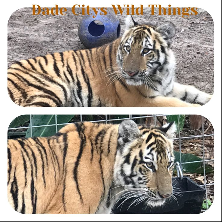 Come visit our zoo for Christmas Family Fun @dadecityswildthings