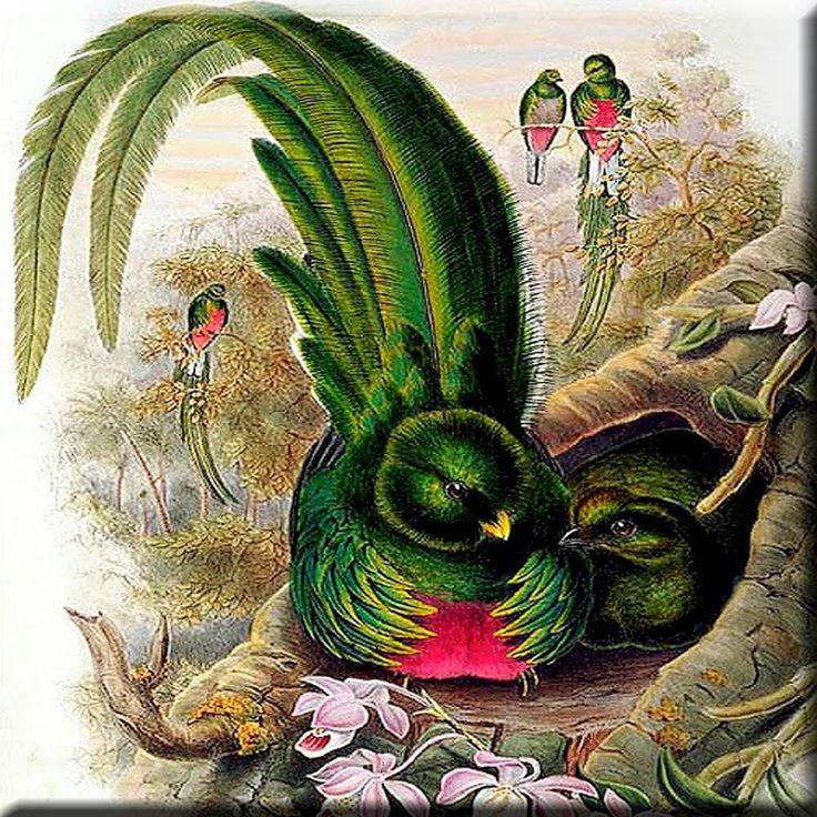 Decorative Ceramic tile 4.25 X 4.25 inch, Illustration Quetzal Bird Painting