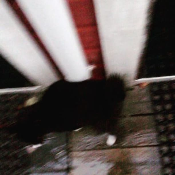 This rainy weather makes us very sad. ☹ #catsofinstagram #kitten #cute #meow #cat #rain #outdoor #sad #weather #kittensofinstagram