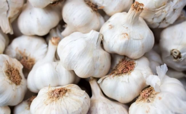 Is Eating Raw Garlic Good For You? | Care2 Healthy Living
