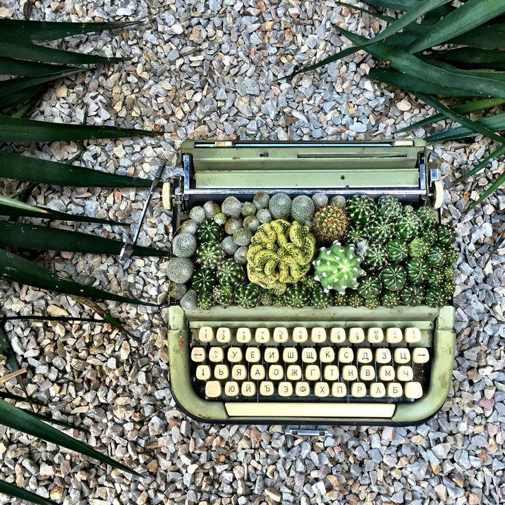 https://m.facebook.com/aysenazkarayalcinafterawhile/ #cactus #kaktüs #sukulent #succulent #terrarium #cactuslove #typewriter #vintage #repurposed #green #decoration #dekorasyon #outdoor #indoor #gardening #flower #floral #aysenazkarayalcin #afterawhile #birsuresonra