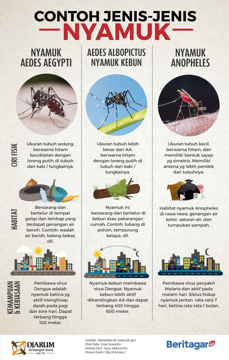 Perbedaan nyamuk aedes aegypti dan nyamuk lain
