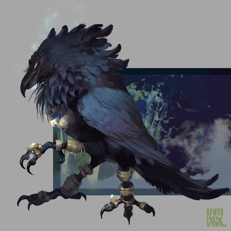 1145 best Creature-Bird images on Pinterest | Creature ...
