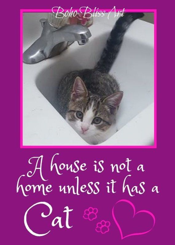 A House Is Not A Home Without A Cat Cat Quote And Art Digital