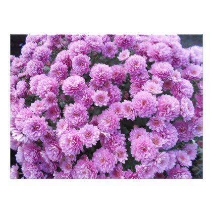 Pink Chrysanthemum Flowers Photo Print - flowers floral flower design unique style