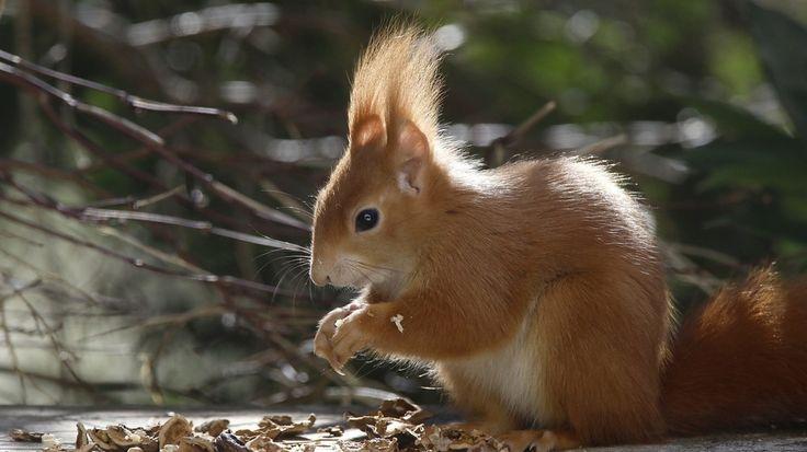 Was Fressen Eichhörnchen