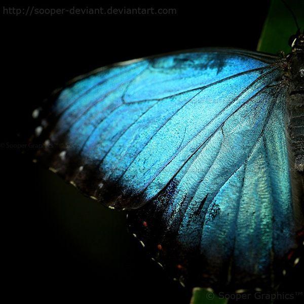 Mettalic Blue butterflyBlue Butterflies, Beautiful, Art, Butterflies Wings, Amazing Colors, Beauty, Butterfly Wings, Blue Morpho, Color Photography
