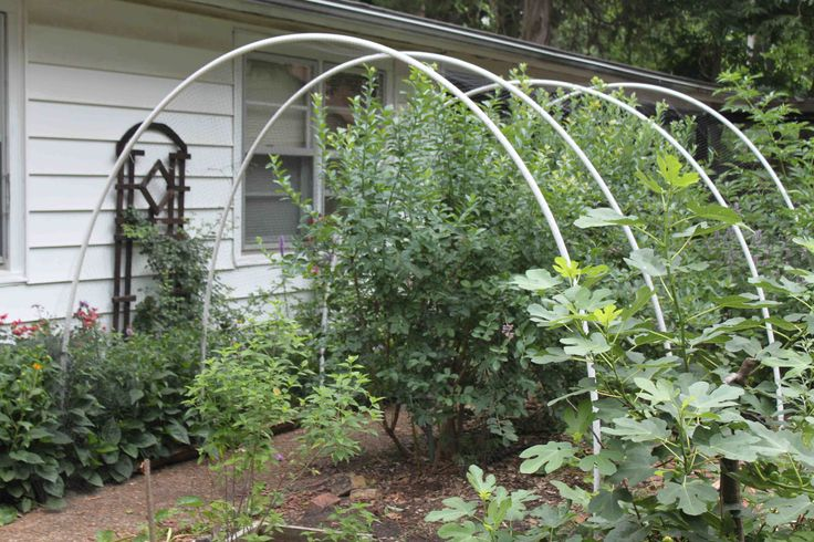 Many years ago I tried draping deer netting over my blueberry bushes. It was a complete failure. I didn't secure the netting at ground level so the birds got up under the net, it was a pain to craw...