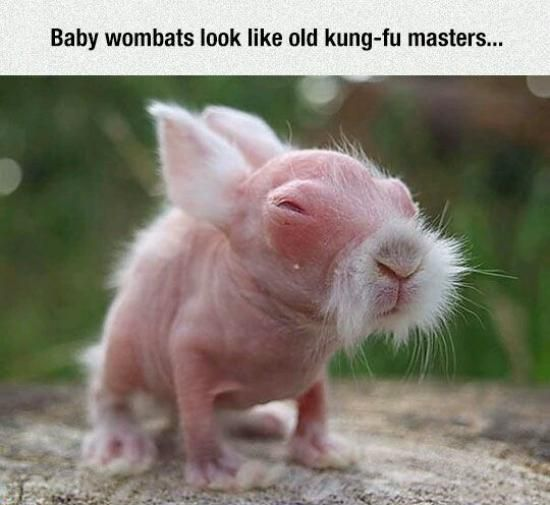 I legitimately thought this was a shaved baby rabbit at first and was so confused and concerned