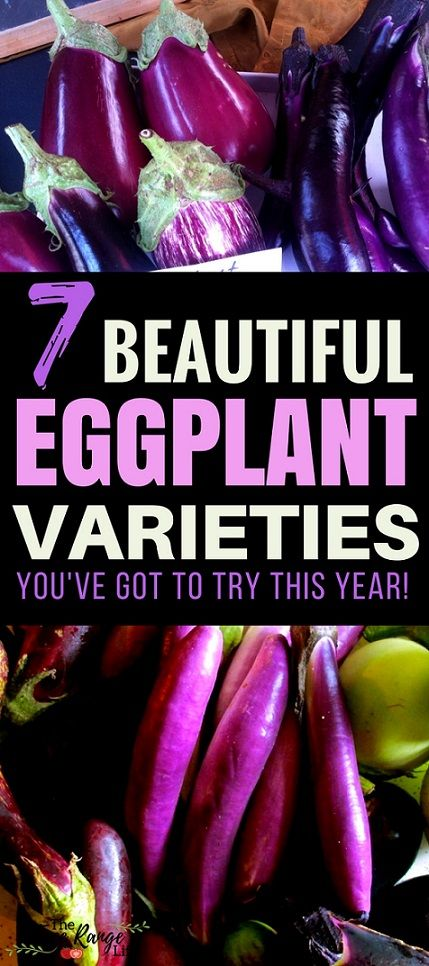 Vegetable Gardening Ideas: Try growing some of these amazing eggplant varieties! You won't be disappointed and your garden and dinner table will look even more beautiful!