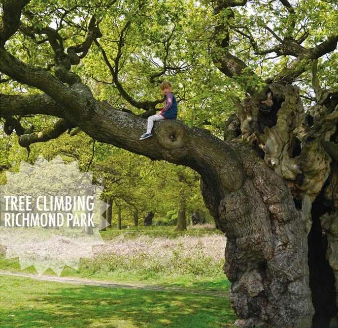 Tree climbing in Richmond Park, London by Alexis at www.somethingimade.co.uk