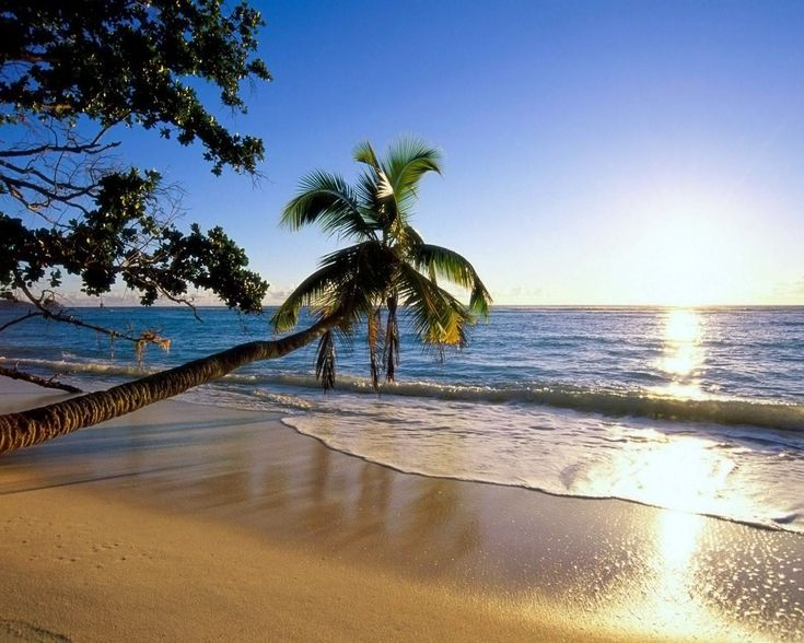 Image detail for -Summer, wallpapers, bright, nature, bulkupload, download, sizes ...