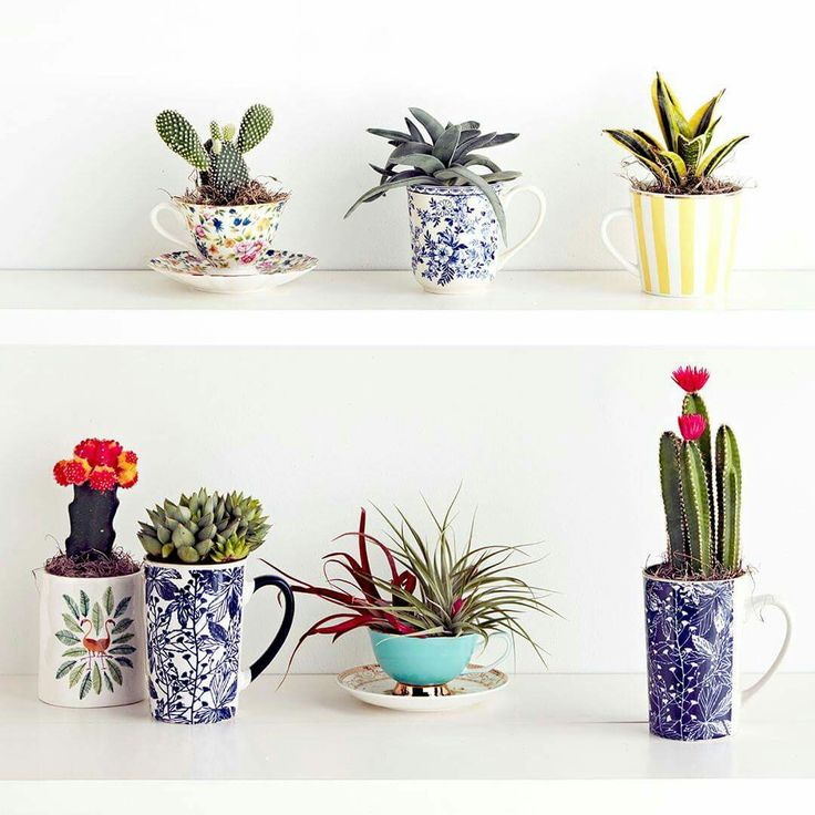 Teacups from Marshall's, make your own teacup planters.