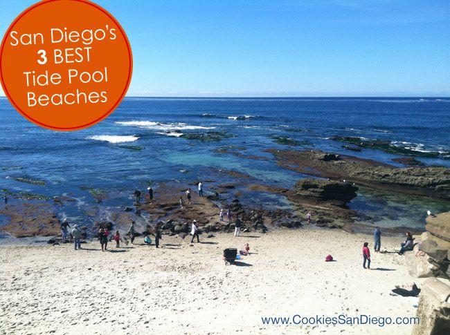 My 3 Favorite San Diego Tide Pools