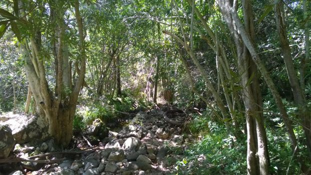 The Boekenhout Trail at Kirstenbosch gives one a good dose of green.