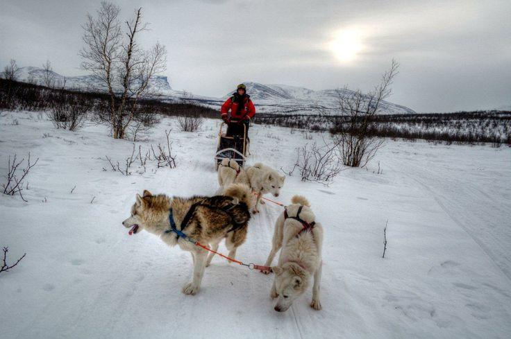 Escursione con i cani da slitta - Dogsledding (Anthony Sardella, Abisko)