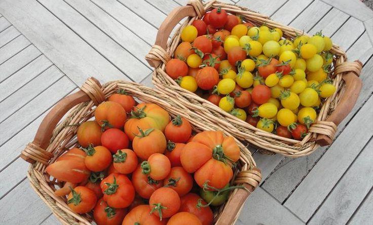 Love freshly picked produce.