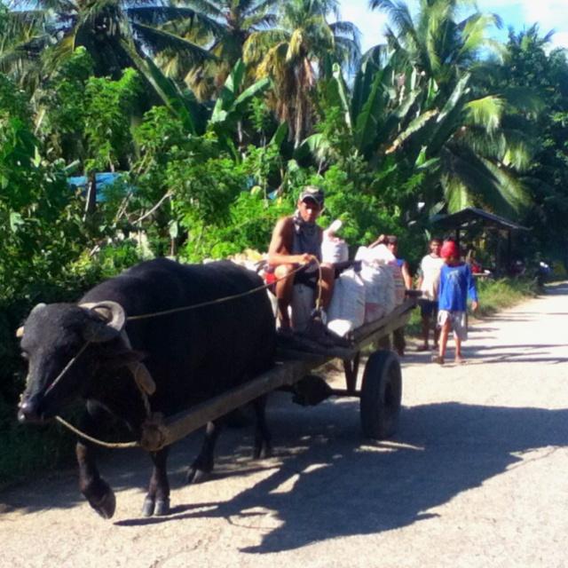 Carabao pulling a cart. La Paz. Zamboanga City, Philippines