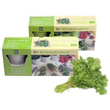 Hierbas de cocina aromáticas (blanco)   practicaciencia.com