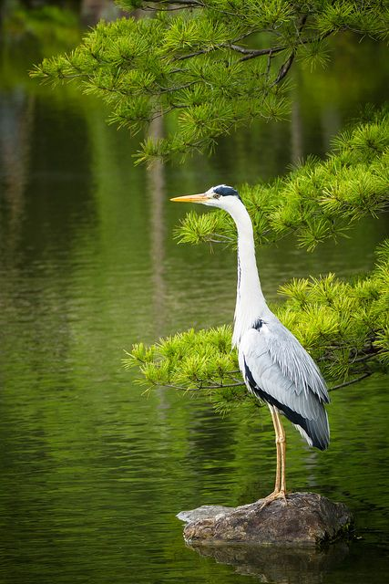 1000+ Images About Birds: Marine Birds, Cranes And Rails