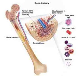 What is Bone Marrow Cancer
