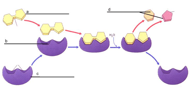 Enzyme Practice Doc Biochemistry Kids Rugs