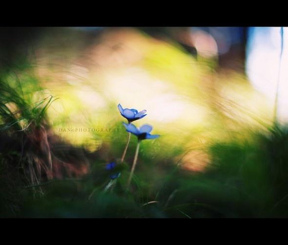 Lavishing Nature Photography