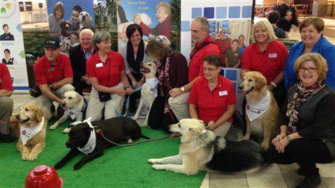 Des chiens pour calmer les voyageurs à l'aéroport d'Halifax | ICI.Radio-Canada.ca