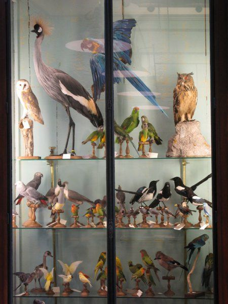Taxidermy from Deyrolle, Paris. Would like to own all of these pieces.