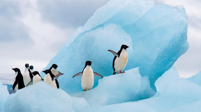 Bucket List: National Geographic Antarctica Expedition