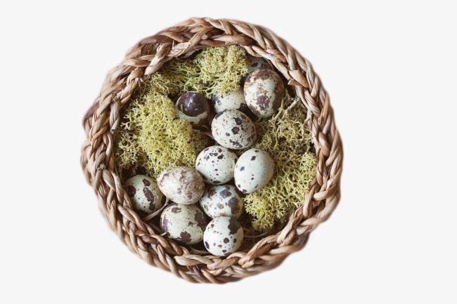 Grass Nest Of Quail Eggs Egg Art Easter Nests Cat Decor