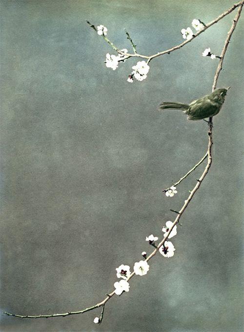 via ElemenoP.: Cherries Blossoms, Japan Prints, Little Birds, Japan Art, Japan Birds Art, Inspiration Christian, Green Birds, Flower Inspiration, Beautiful Pictures