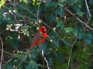 backyard bird sanctuary on pinterest posts other and backyard birds