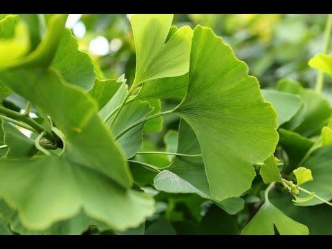 LUC BODIN - ALZHEIMER - Remèdes naturels - YouTube