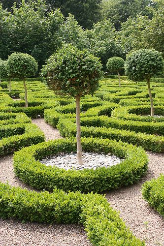 Boxwood garden: green / color / shape / graphic / elegant / classic