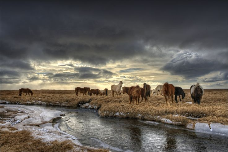 Icelandic Horses by Ian Rolfe on 500px